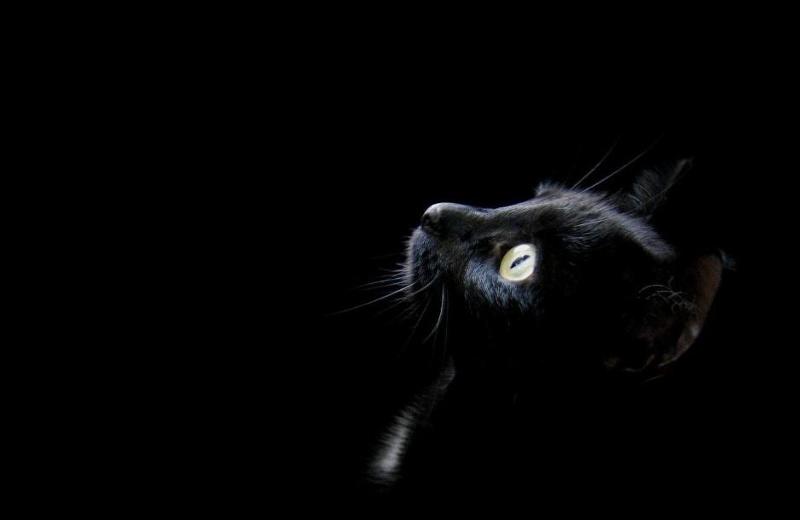 El tema oscuro de la semana, gatos negros y brujas ¿por qué se cree que traen mala suerte?