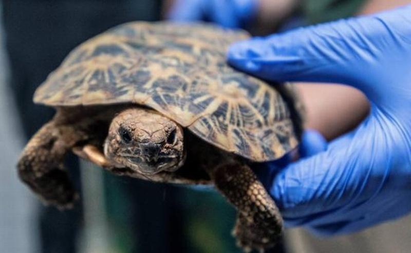 Se va de fiesta y amanece con una tortuga muerta dentro de su zona íntima
