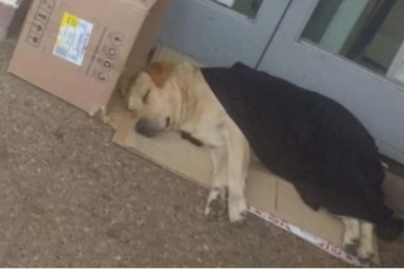 Perro espera a su dueño afuera del hospital sin saber que él falleció