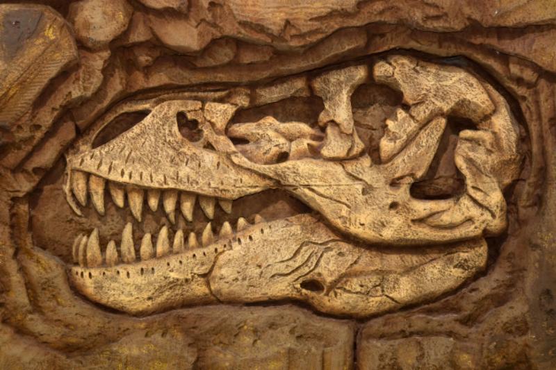 ¡Encuentran fósil de dinosaurio en estacionamiento de Veracruz!