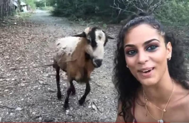 Cabra embiste a chica mientras intentaba tomar selfie #VIDEO