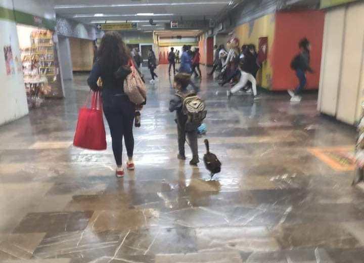 Captan a un pato con tenis en el Metro de CDMX (+fotos)