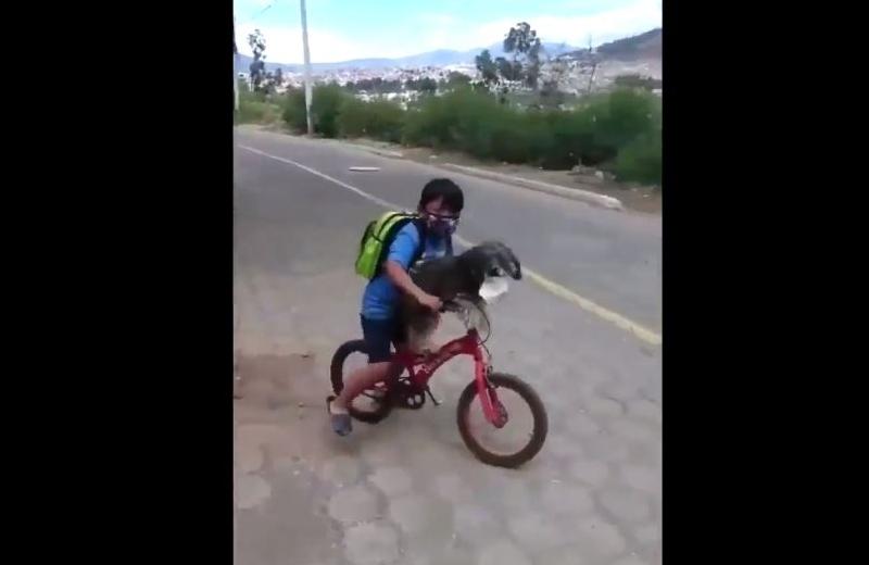 ¡Amor y ejemplo! Niño pone cubrebocas a su perrito para pasearlo en bici (+video)