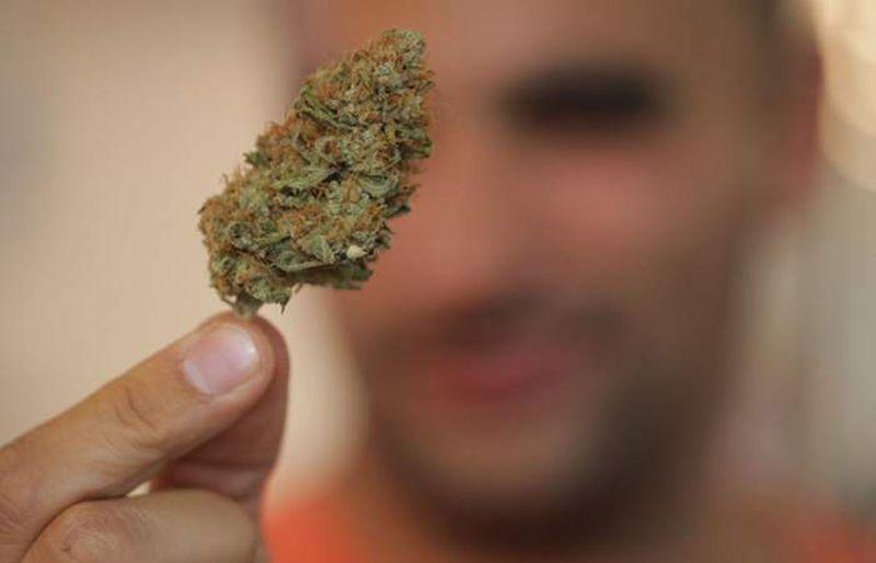 Ofrecen trabajo como catador de marihuana con salario de 58 mil pesos