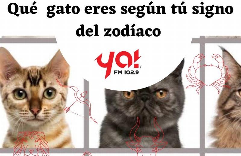 Horóscopos Impactantes, ¿Qué gato eres según tú signo del zodiaco?