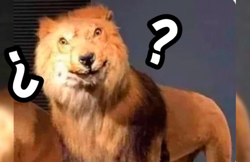 En China, un zoológico hace pasar a un perro por león