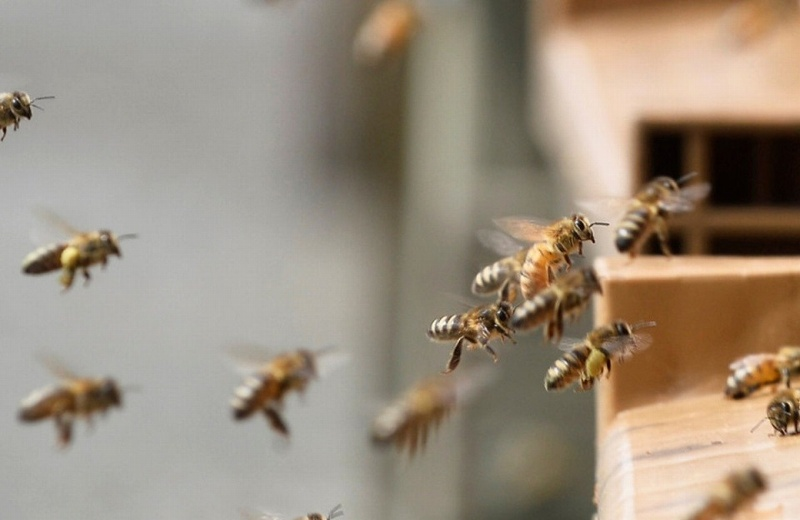 ¡No mmesss!.. Halla más de 100 mil abejas en la sala de su casa (+video)
