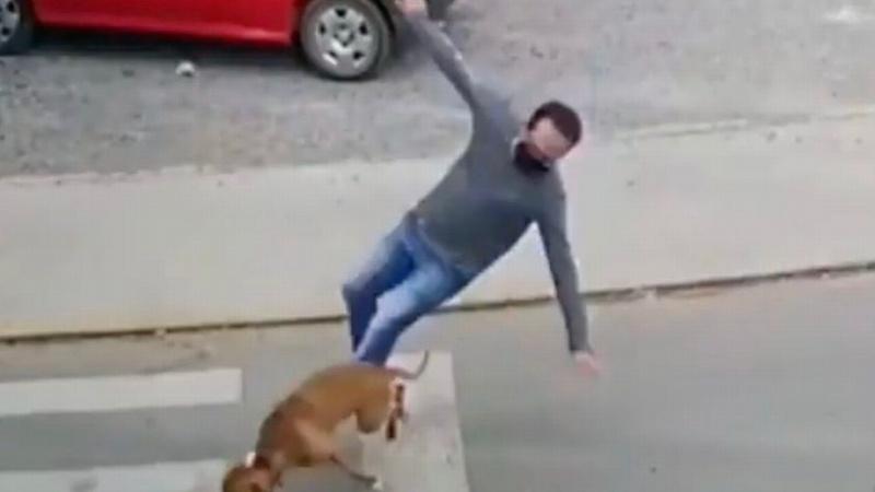 Perro atropella a persona, ¡firulaís turbo! el video se viraliza