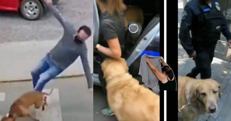 El perro que se hizo viral por atropellar gente, fue detenido (+video)